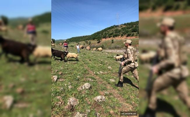 Jandarma, Küçükbaş Hayvanları Bularak Sahibine Teslim Etti