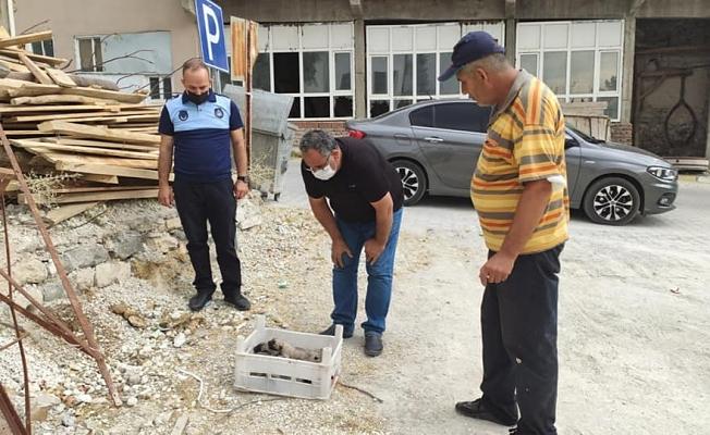 Ölüme Terk Edilen Yavru Köpeklere Belediye Sahip Çıktı