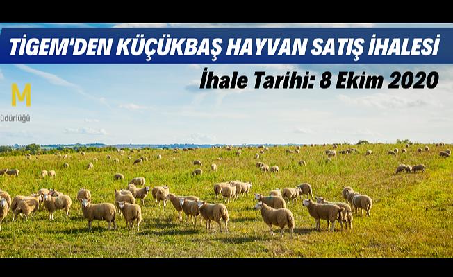 Reforme koyun, koç/erkek toklu ve erkek kuzu satılacaktır