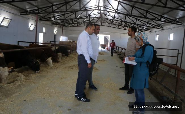 Kırsalı Kalkındırmaya Yönelik Proje Yap, TKDK'dan Desteği