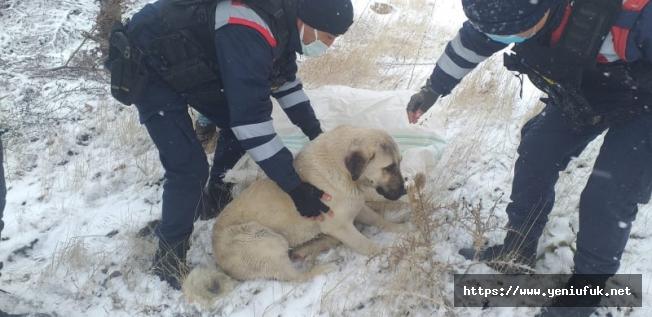 Yaralı köpeğe Jandarma'dan şefkat eli