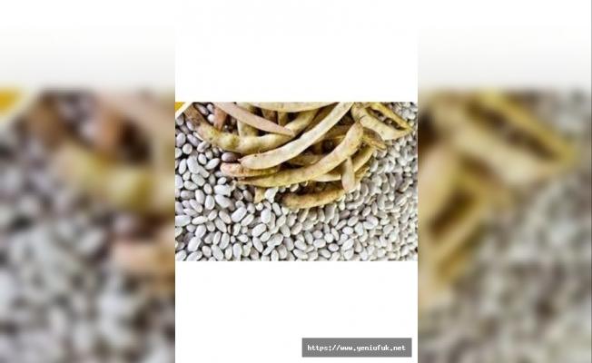 % 75' Hibeli Sertifikalı Kuru Fasulye Tohumluğu Dağıtımı Yapılacaktır