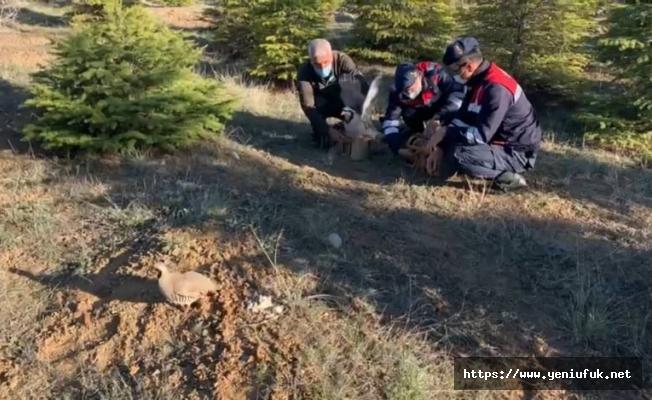 Jandarmadan kaçak avcılara operasyon