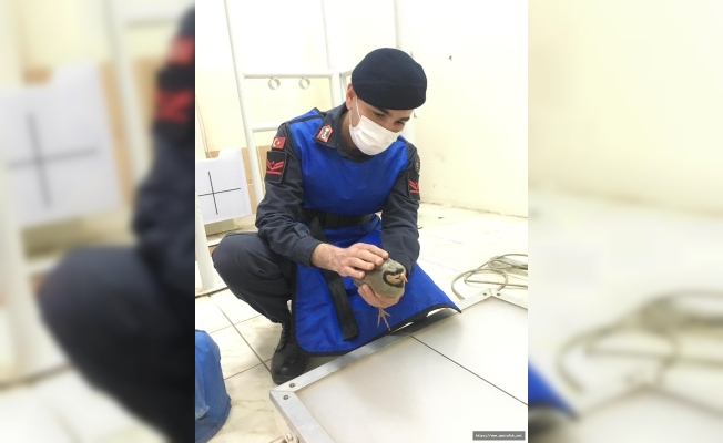Yaralı Keklik Jandarma Sayesinde Hayata Tutundu