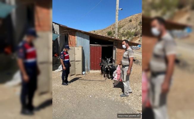 Kaybolan keçiler drone'la bulundu