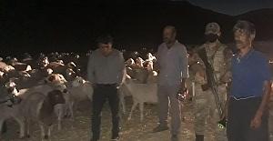 Kaybolan 300 Koyun Drone  İle Bulundu