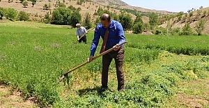 İl Müdürü Arıcak İlçesinde Çiftçilerle Yonca Hasadı Yaptı
