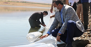100 Bin Yavru Suya Bırakıldı