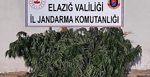 Elazığ'da Jandarma, Zehir Tacirlerine Nefes Aldırmıyor