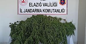 Jandarmanın Zehir Tacirlerine operasyonları devam ediyor